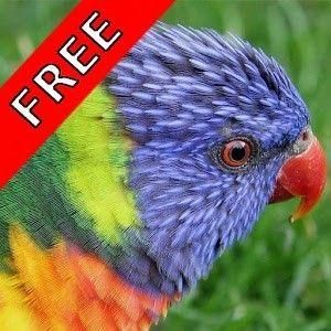 Bird Songs - Hangi Kuş Nasıl Ötüyor Android Uygulaması APK İndir